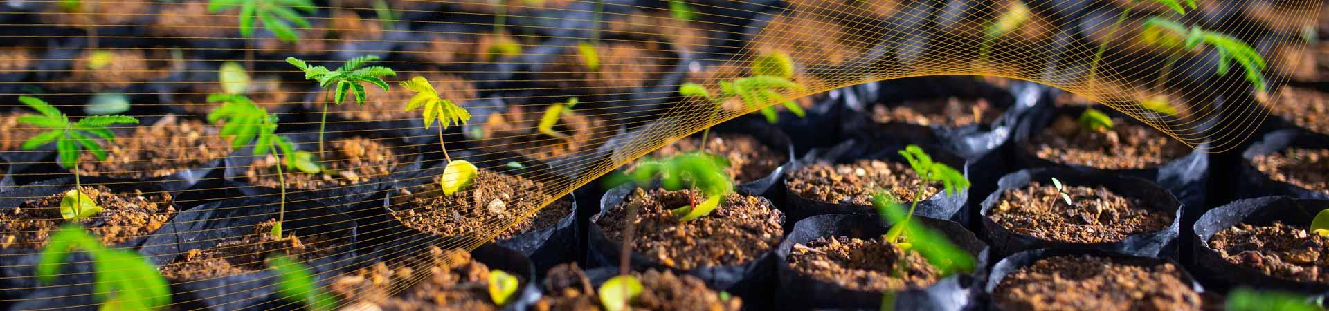 uma plantação que demonstra o compromisso com a sustentabilidade